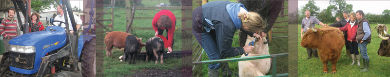 Some of the hands-on activities we get up to on smallholding course days