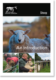 Sheep keeping course notes